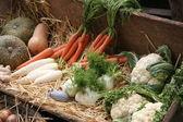 Ancient cart full of fresh vegetables and seasonal fruits for sa — Stock Photo