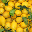 Wallpapers of ripe lemons from Sicily yellow excellent to make l - Stock Photo