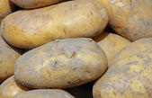 Mature mountain potatoes sold by greengrocers — Stock Photo