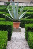 Agave and aloe plant in the flower bed of a convent — Stock Photo