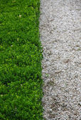 Green hedge and half white pebbles cobbled road vertically — Stock Photo