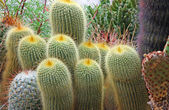 Mix of many succulents and cactus with very sharp prickles and t — Stock Photo