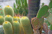 Succulents and cactus with very sharp prickles and thorns — Zdjęcie stockowe