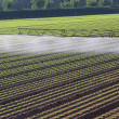 Automatic irrigation system for a field of fresh salad — Stock Photo