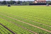 Intensieve teelt van salade in Noord-Italië met plantaardige — Stockfoto