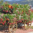 Beautiful mountain flower cart with many Geraniums and other flo — Stock Photo #29726653