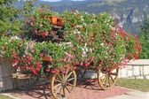 Beautiful mountain flower cart with many Geraniums and other flo — Stock Photo
