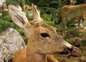 Small baby deer fallow deer wild animals of the forest — Stock Photo