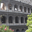 Stock Photo: Arches of imposing Colosseum among flowering plants of Olean