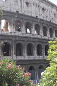 Arches of the imposing Colosseum among flowering plants of Olean — Stock Photo