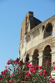 Colosseum between flowering plants of Oleander in Rome 6 — Stock Photo