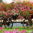 Stock Photo: Wooden wagon with many blooming Geraniums in summer in mount