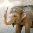 Heavy elephant with a long trunk while throw sand on the back — Stock Photo