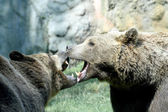 Two ferocious bears struggle with mighty bites and blows the mou — Stock Photo