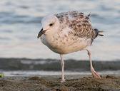 Yalnız kız plaj kıyısında bir martı — Stok fotoğraf