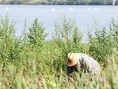 Working as a farm labourer farmer — Stock Photo