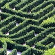 Maze made with hedges in a garden of a villa — Stock Photo