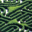 Complicated maze made with hedges in garden of villa — Stock Photo #32581677
