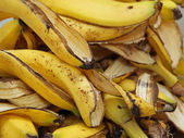 Many banana peels in the composter for humus — Stock Photo