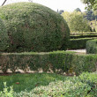 Very nice Italian garden with hedges cut very accurately in the — Stock Photo #36174659