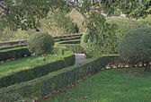 Very nice Italian garden with hedges cut very accurately in the — Stock Photo