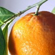 Clementine with green leaves very close — Stock Photo