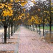 Trees with leaves falling in autumn on a city park — Stock Photo