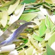 Green shoots of bamboo and steel pliers — Stock Photo