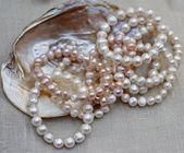 Moeder van de parel ketting met originele oester van jewele te koop — Stockfoto