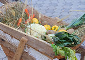 Fresh seasonal fruits and vegetables in the cangrejo — Стоковое фото
