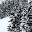 Fir trees covered with snow in the mountain — Stock Photo #42118891