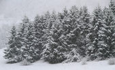 Whitewashed trees during copious snowfall in winter — Stok fotoğraf