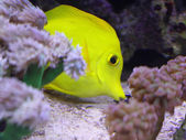 Tropical fish that swims in the large marine aquarium in search  — Stock Photo