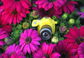 Toy camera amid the purple flowers — Стоковое фото