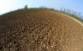 Newly sown grain field in spring — Stock Photo