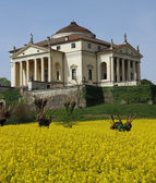 Villa La Rotonda with yellow flower field of rapeseed in Vicenza — Stock Photo