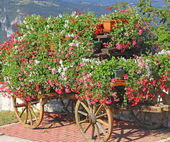 Mountain flower cart with many Geraniums and other flowers — Stock Photo