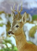 Deer wild animals of the forest — Stock Photo