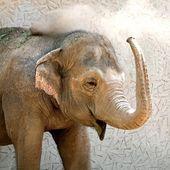 тяжелые слон с длиной ствола — Стоковое фото