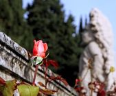 Rosebud with a statue of a dwarf — Stockfoto