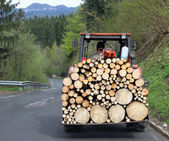 Tractor transport a full load of wood 1 — Stock Photo