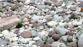 Tapered and rounded pebbles on the shore of the river in Norther — Stock Photo