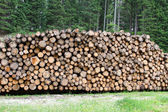 Logs cut by loggers in the mountains for the furniture industry  — Stock Photo