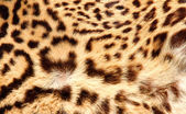Leopard fur with the classic dark spots — Stock Photo
