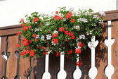 Flowered terrace with large pots of Geraniums blooming 7 — Stock Photo