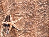 Huge Starfish tropical sea water — Stock Photo