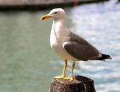 Seagull on the pole to anchor the ship in Venice — Stockfoto