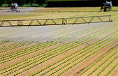 Intensive irrigation in vegetable field in summer — Stock Photo