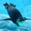 Stock Photo: Penguin & Sydney Aquarium
