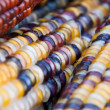Decorative corn cobs — Stock Photo
